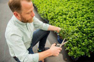 Azalea kwekerij floramor