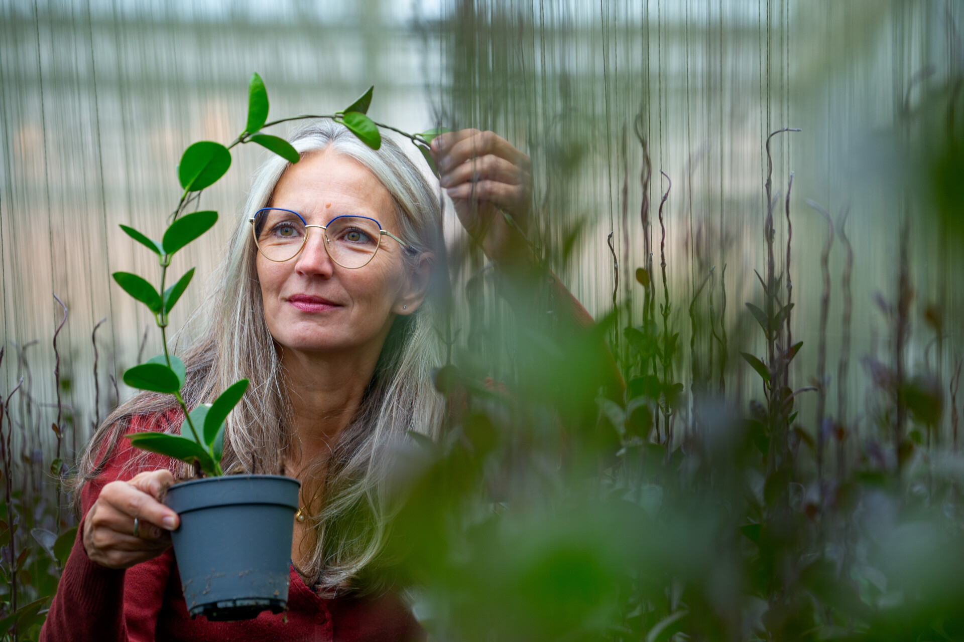 Kwekerreportage seizoensplanten
